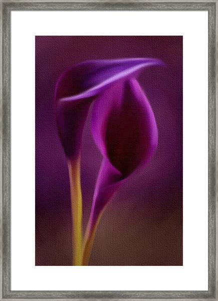 Royal Cayla Framed Print