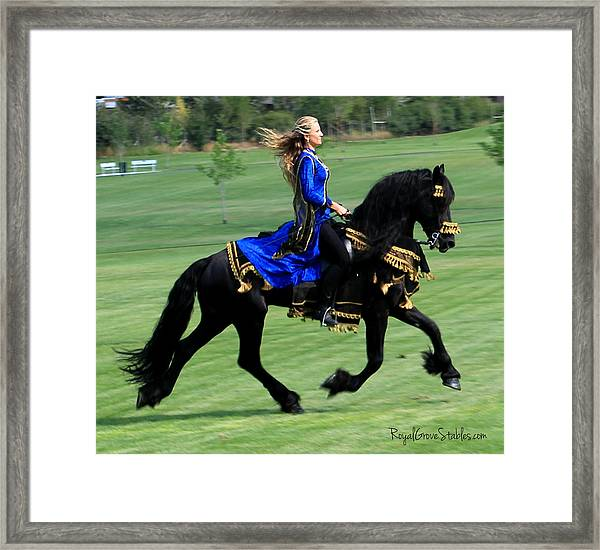 Royal Friesian Framed Print