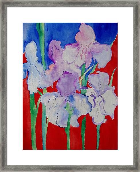 Royal Iris Framed Print by Phoenix Simpson