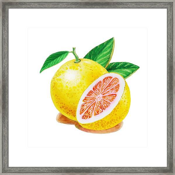 Ruby Red Grapefruit Framed Print