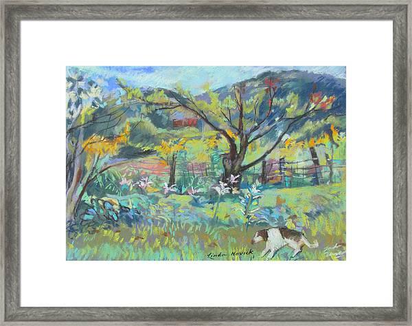 Ruby Runs Through Under Mountain Farm Framed Print