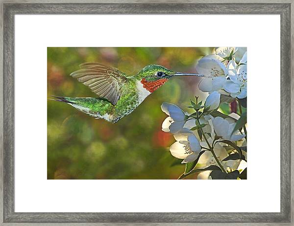 Ruby World Framed Print