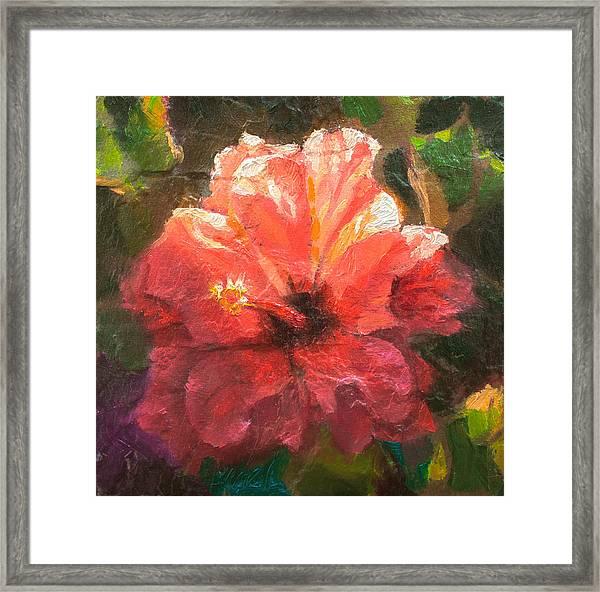 Ruffled Light Double Hibiscus Flower Framed Print