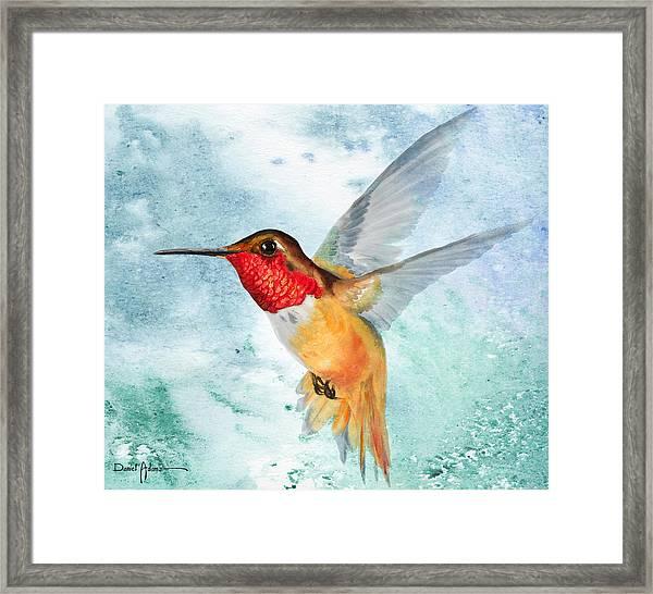 Da199 Rufous Humming Bird By Daniel Adams Framed Print