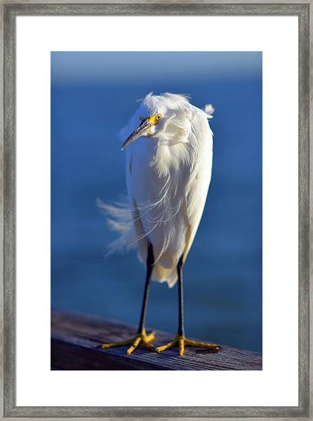 Rufus The Bird Framed Print