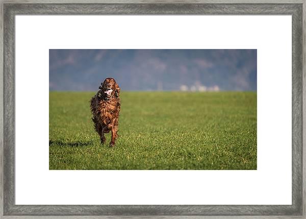 Run Allegro Run Framed Print