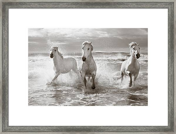 Run White Horses II Framed Print