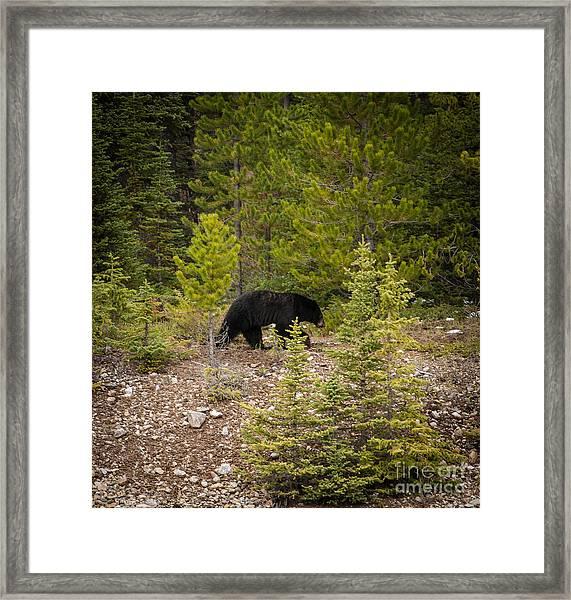 Running Bear Framed Print