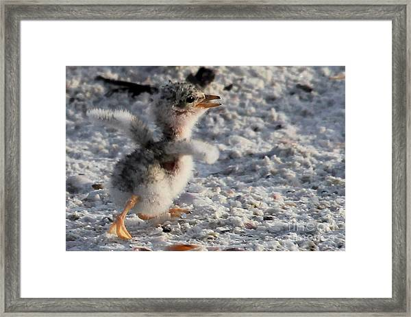 Running Free - Least Tern Framed Print