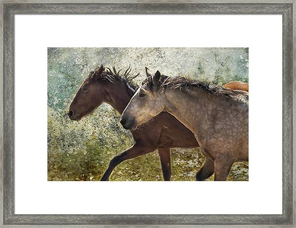 Running Free - Pryor Mustangs Framed Print