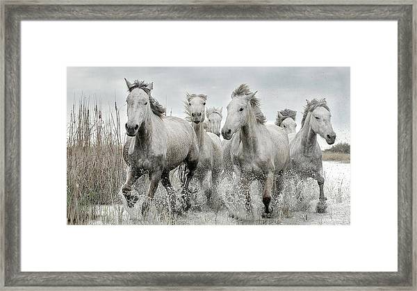 Running Gang Framed Print