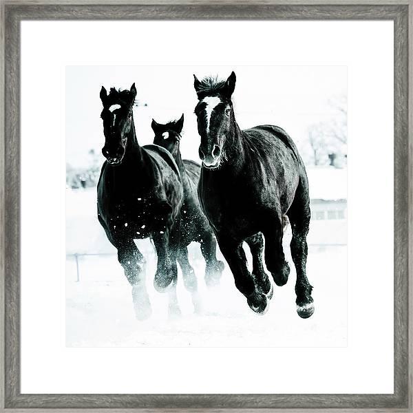 Running Horses Framed Print by Makieni's Photo