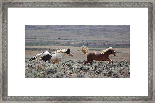Running Mustangs Framed Print