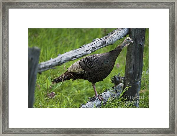Rural Adventure Framed Print