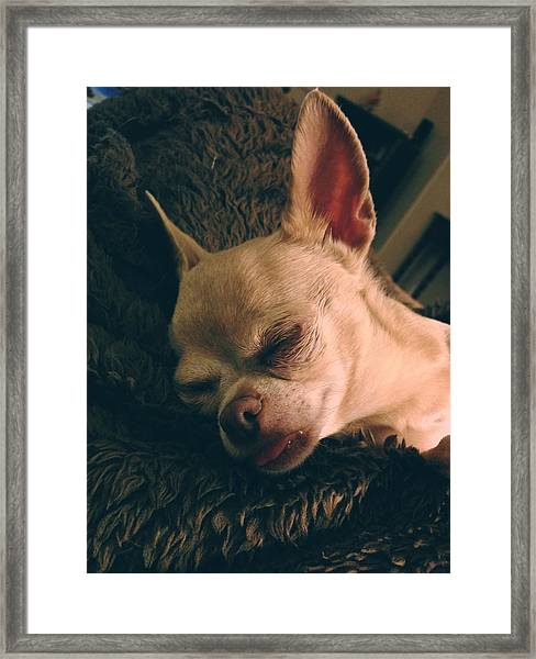 Sacked Out Framed Print