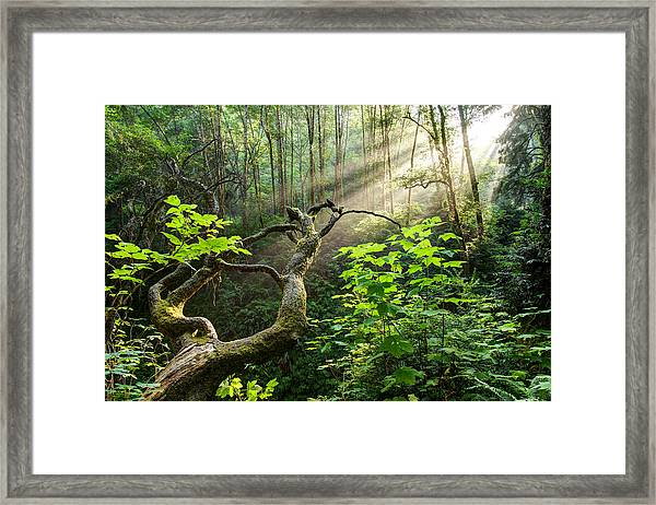 Framed Print featuring the photograph Sacred Grove by Dustin  LeFevre