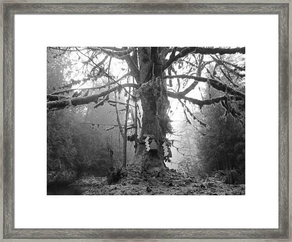 Sacred Tree No. 2 Framed Print