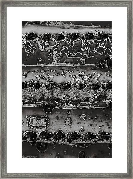Saguaro Cactus Black And White 2 Framed Print