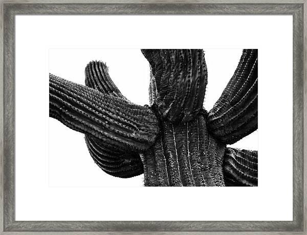 Saguaro Cactus Black And White 3 Framed Print