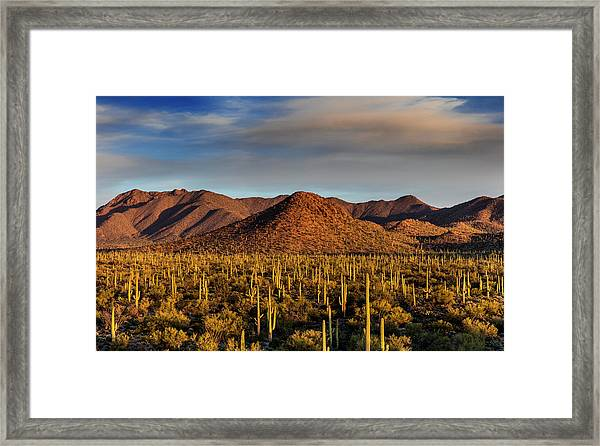 Saguaro Cactus Dominate The Landscape Framed Print by Chuck Haney