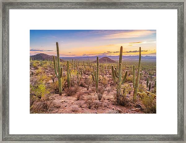 Saguaro Cactus Forest In Saguaro National Park Arizona Framed Print by Benedek