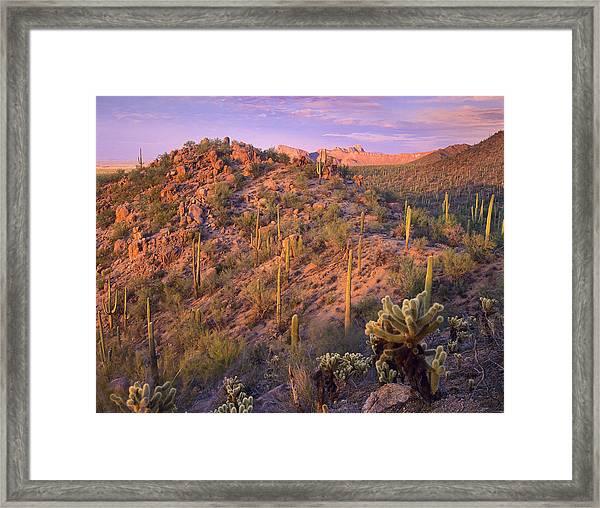 Saguaro National Park Framed Print