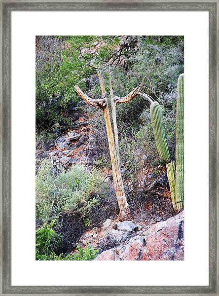 Saguaro Skeleton Framed Print