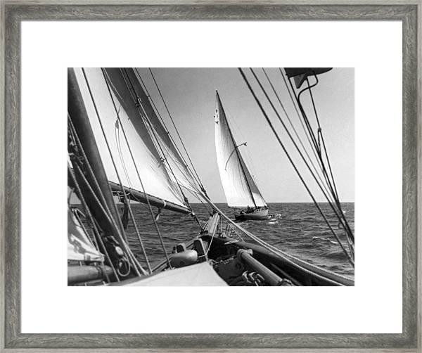 Sailing In Los Angeles Regatta Framed Print