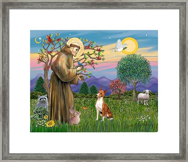 Saint Francis Blesses A Basenji Framed Print
