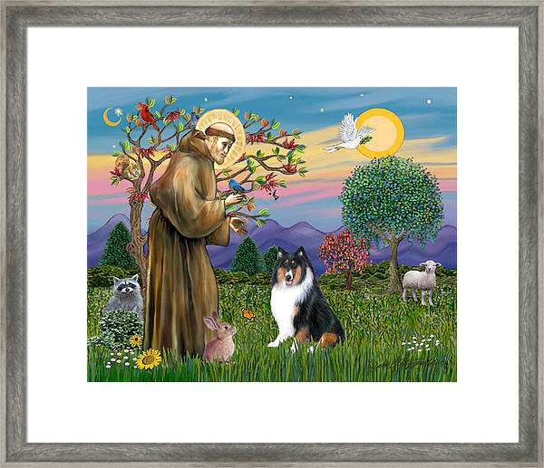Saint Francis Blesses A Tri Color Collie Framed Print