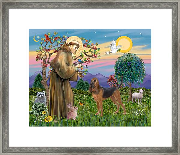 Saint Francis Blessing A Bloodhound Framed Print