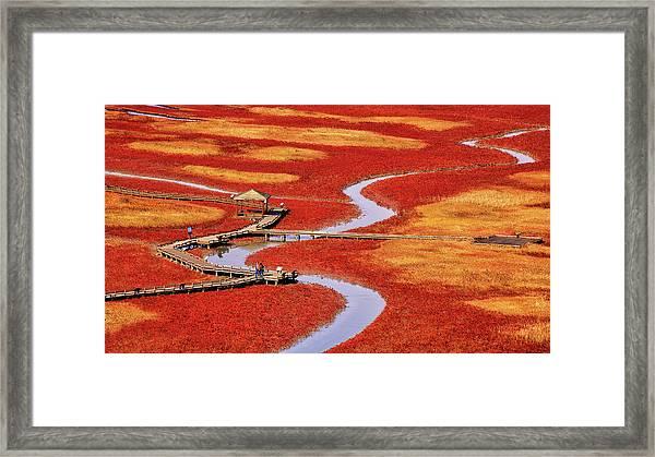 Salt Pond Framed Print by Tiger Seo