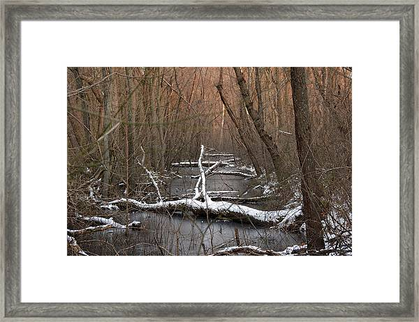 Salty Logs  Framed Print by Bill Helman