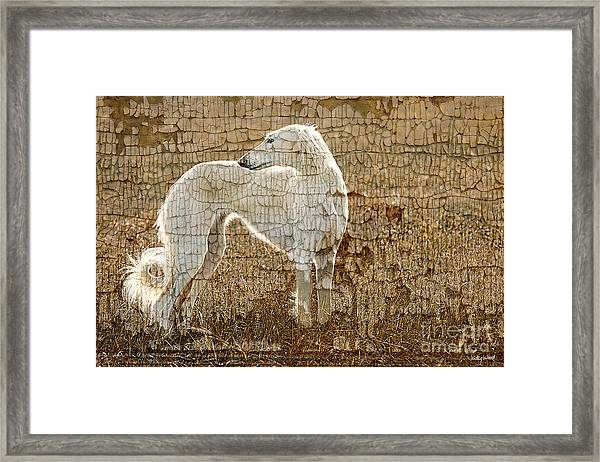 Saluki Texture Framed Print by Judy Wood