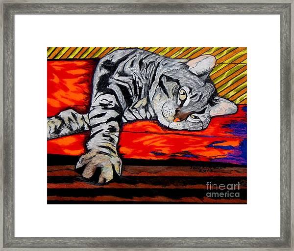 Sam The Cat Framed Print