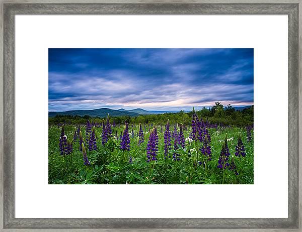 Sampler Field Lupine Framed Print