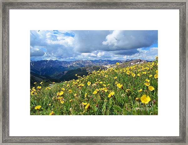 San Juan Summer Framed Print