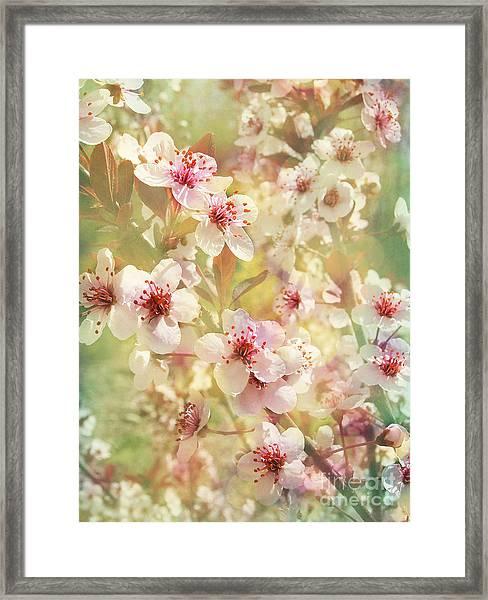 Sand Cherry Flourish Framed Print