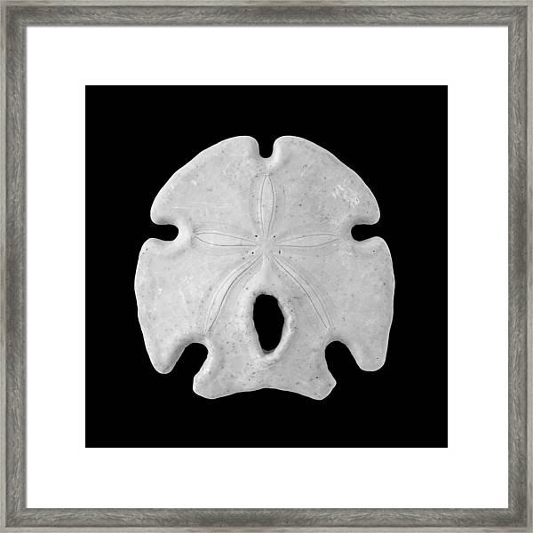Keyhole Sand Dollar Framed Print