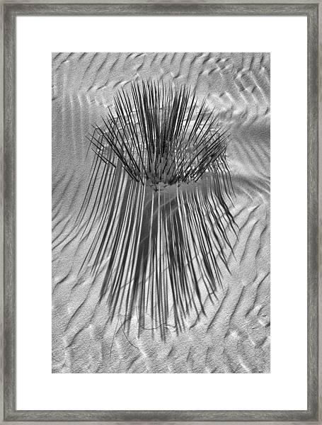 Sanded Yucca Framed Print