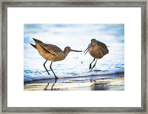 Sanderlings Playing At The Beach Framed Print