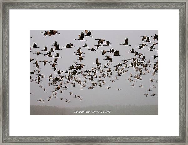 Sandhill Crane Migration Framed Print