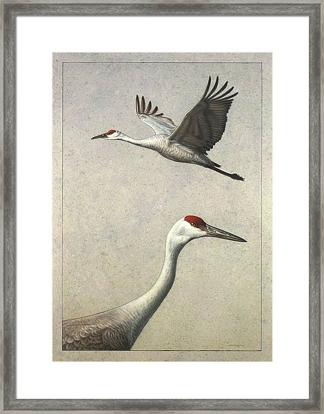 Framed Print featuring the painting Sandhill Cranes by James W Johnson
