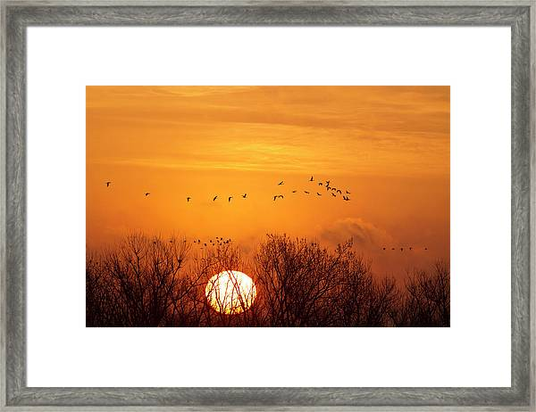 Sandhill Cranes Silhouetted Aginst Framed Print
