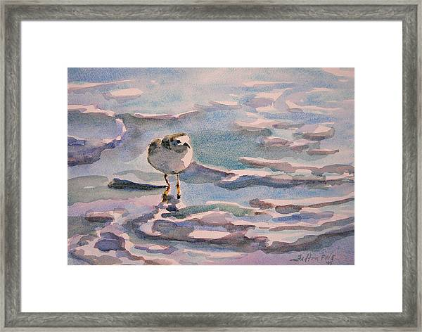 Sandpiper And Seafoam 3-8-15 Framed Print