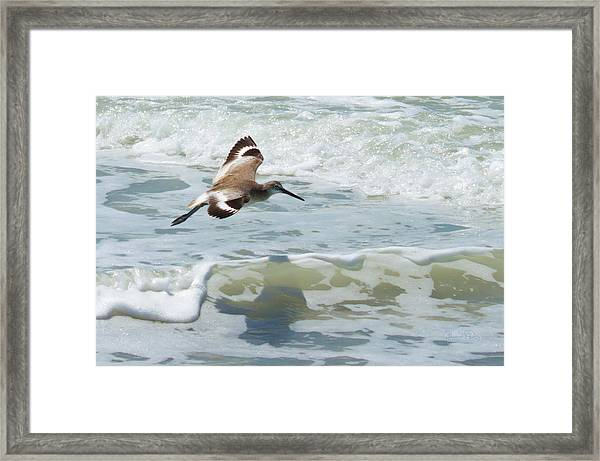 Sandpiper Flight Framed Print
