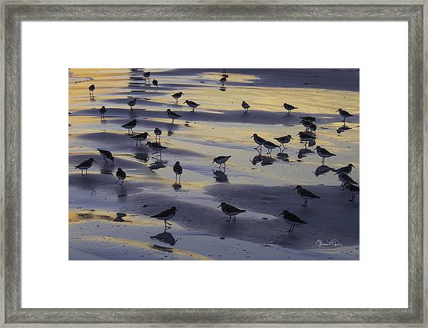 Sandpiper Sunset Convention Framed Print
