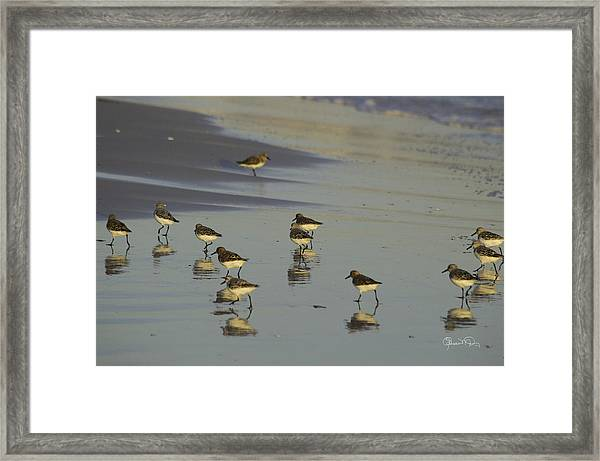 Sandpiper Sunset Reflection Framed Print