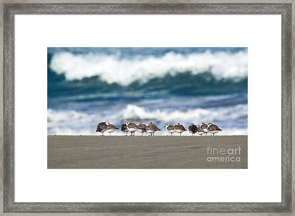 Sandpipers Keeping Warm On A Very Cold Day At The Beach Framed Print