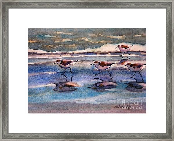 Sandpipers Running In Beach Shade 3-10-15 Framed Print